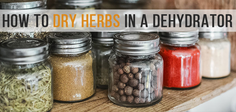 Our Guide To Dry Herbs In a Dehydrator